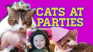 Download Cats at Parties - The Doubleclicks Video