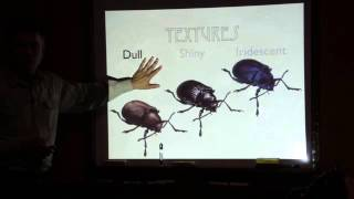 Download Drawing Insects with John Muir Laws Video