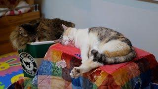 Download 愛おしい猫たち、この先もずっと一緒に‥ Video