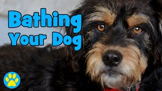 Download How To Bathe Your Dog At Home Video