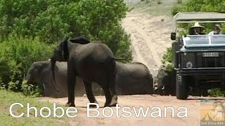 Download Self Drive Chobe Botswana Video