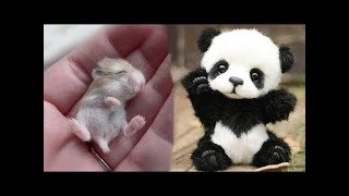 Download Funny and Cute Animals Doing Funny Things 2019 Video