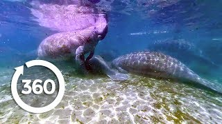 Download Let's Go Places: Florida | Oh, the Huge Manatees! (360 Video) Video