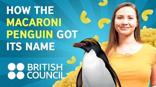 Download How the Macaroni penguin got its name Video
