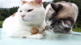 Download のせ猫 x かたつむりとクロ Snail and cats Video