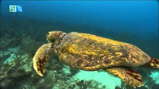 Download Belize Barrier Reef Reserve System (UNESCO/TBS) Video