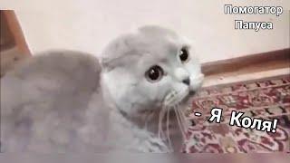 Download Говорящие коты! Лучшая подборка №11 Video