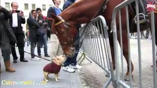 Download FUNNY HORSES ★ Funny Horse Videos [Funny Pets] Video