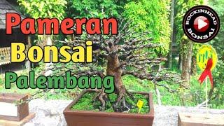 Download Pameran bonsai palembang 2019 part 2 Video