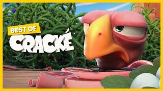 Download CRACKÉ - Alambre de espino   Dibujos animados para niños   Compilacion Video