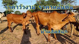 Download ราคาวัววันนี้ (18 ก.ค.62) วัวสวยๆแม่สาวสวยๆๆราคาหมื่นต้นๆ ตลาดนัดบ้านสมสนุก อ.บรบือ จ.มหาสารคาม Video