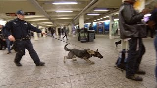 Download New Vapor Wake Dogs Are Specially Trained To Detect Explosives Even In a Crowd Video