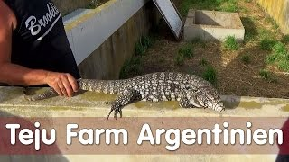 Download Reptil TV - Folge 101 - Teju Farm Argentinien Video