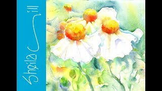 Download How to paint Tree Poppies in Watercolour very loose wet into wet by Sheila Gill Video