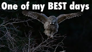 Download One of My BEST Days Ever of Owl Photography   Wildlife Photography Vlog Video