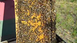 Download Checkerboarding BeeHive Fat Bee Man Video