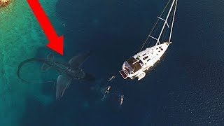 Download 10 Sea Monsters ATTACKING A Boat! Video