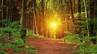 Download 3 Hours Music With No Loops. Inner Peace, Relaxing, Soothing Music Video