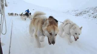 Download Greenland 2016 - Dog Sledding Video