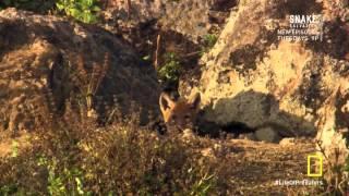 Download Secret Life of Predators S01 E03 Exposed HDTV Video