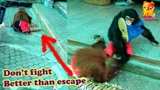 Download Orangutan Don't fight Better than escape Video