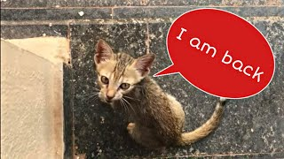 Download Stray kitten came back to me after a few days of absence|hungry stray kitten just needs food| Mar fy Video