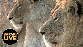 Download safariLIVE - Sunrise Safari - August 24, 2019 Video