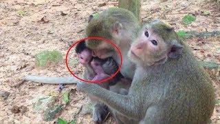 Download Pleas give my baby back why you always kidnapped Angkor Daily 720 Video