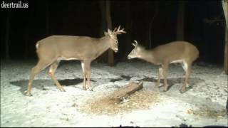 Download Spike And The 8 Point Buck Video