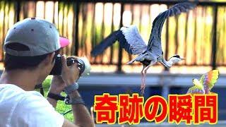 Download 鳥VS人間のバードウォッチング選手権で奇跡の1枚が撮れました!! Video
