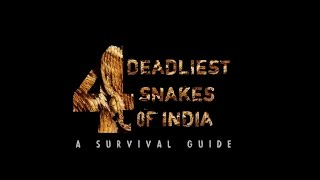 Download 4 Deadliest Snakes of India   A Survival Guide Video