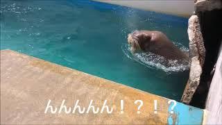 Download ヒマワリの迫力ある・・鼻息(笑) Video