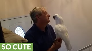 Download Cockatoo becomes thrilled when owner arrives at home Video