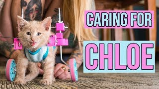 Download Caring for a Paralyzed Kitten, Chloe (UPDATE!) Video