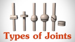 Download The 6 Types of Joints - Human Anatomy for Artists Video