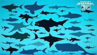 all sharks in hungry shark evolution