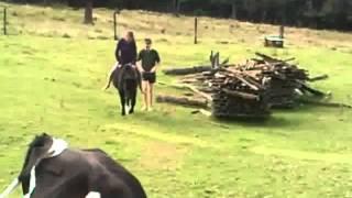 Download No horse? Ride a calf! Video