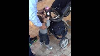 Download Stokke stroller for Adult Video