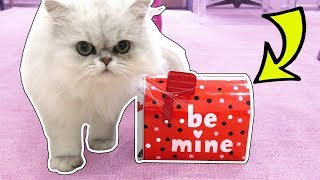 Download CLOUD GETS HIS VALENTINE'S DAY PRESENTS!! Video