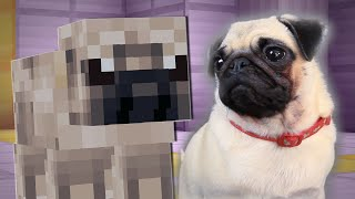 Download PUGS PLAY MINECRAFT Video