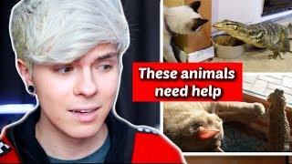Download Pet Youtuber Reacts to Viral Lizard Compilation! *Cringe* Video