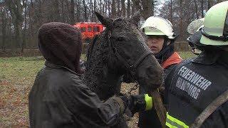 Download Pferd im Schlamm versunken - horse into swamp Video