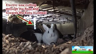 Download We had to use an electric SAW to save this family of homeless bunnies!!! DANGEROUS RESCUE!!! Video