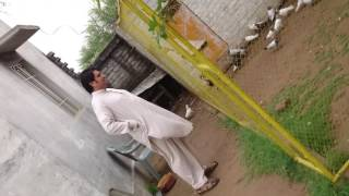Download حمام باکستانی Pakistani pigeons Ustad Boota Farooq Video