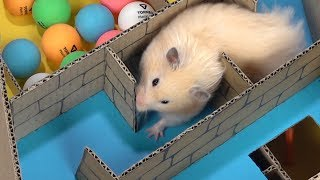 Download My Funny Pet Hamster in 6-Level Pyramid Maze Video