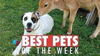 Download Best Pets of the Week | August 2018 Week 1 Video