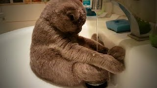 Download Crazy Cats 😹😹 Funny Cats Love To Play Water (Full) [Funny Pets] Video