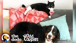 Download The Struggles of Having a Little Sister | The Dodo Odd Couples Video