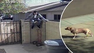 Download 10 Perros VS Intrusos Captados en Cámara Video