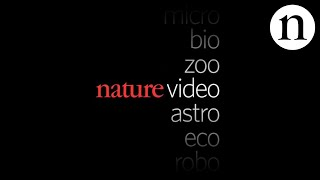 Download TRAILER: Nature Video Video